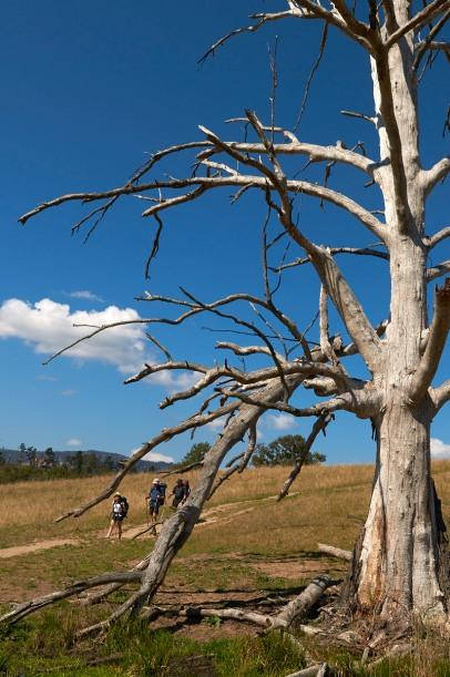 6 Foot Track NSW MEL_8773