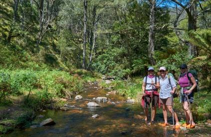 6 Foot Track NSW MEL_8854