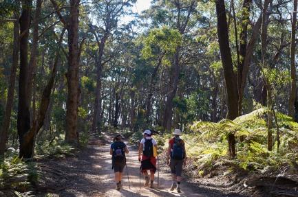 6 Foot Track NSW MEL_8871