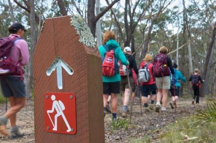 6 Foot Track NSW MEL_8893