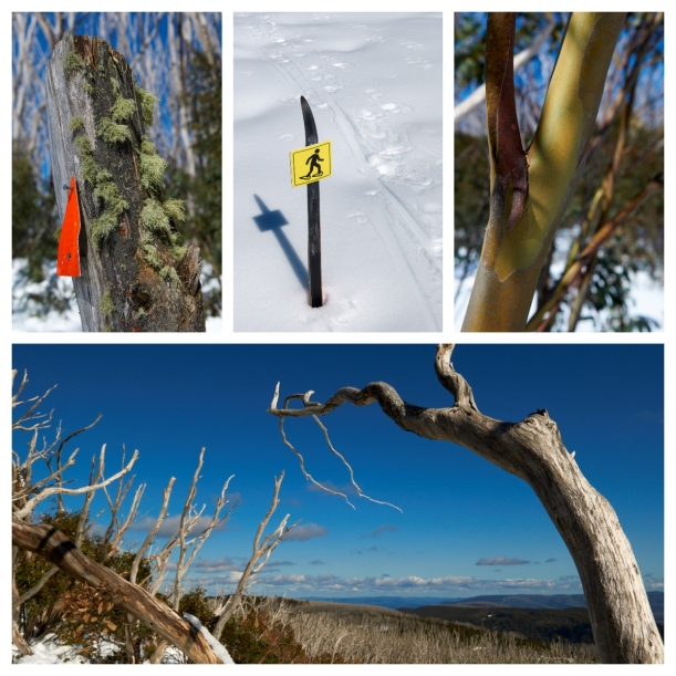FotoJet snowshoe1
