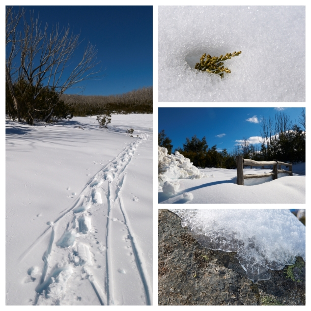 FotoJet snowshoe2