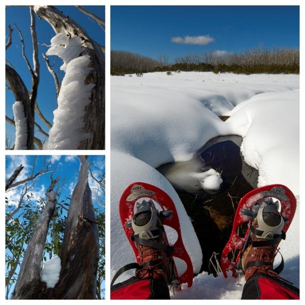 FotoJet snowshoe3
