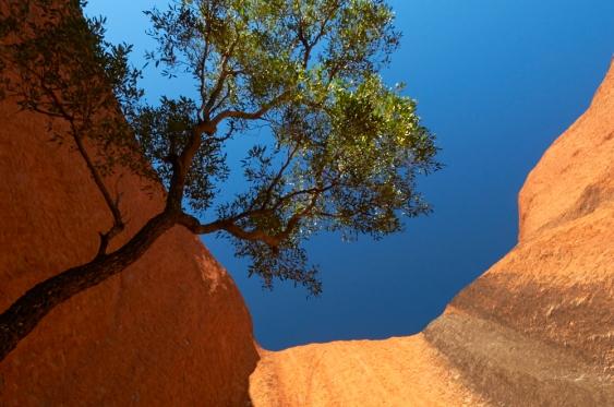 MEL_3644 Uluru Circuit
