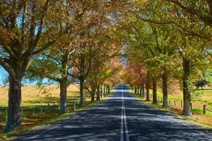 Tenterfield NSW MEL_1049 1