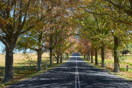 Tenterfield NSW MEL_1049